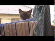 sail cat